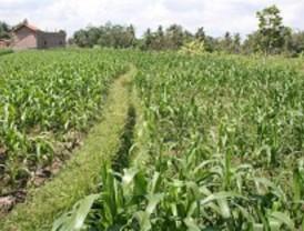 Soluciones para fertilizar sin contaminar