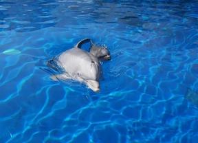 Nace una cría de delfín en Zoo Aquarium de Madrid
