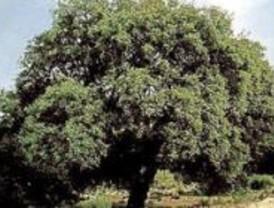 Los 'domingueros' dañan las Dehesas de Cercedilla, según Ecologistas