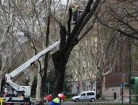 Los trabajos de poda y conservación de árboles obligan a cortar varias calles esta semana