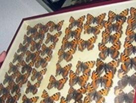 Colección entomológica de la Universidad Autónoma