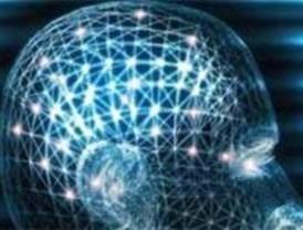 Investigadores de la UAM para conocer cómo funciona el cerebro humano