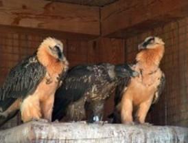 La Comunidad organiza rutas, visitas y talleres de anillamiento para celebrar el Día de las Aves
