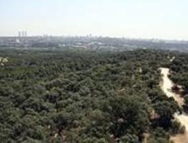 Ecologistas en Acción denuncia la muerte de los árboles plantados en período electoral