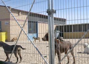 Valdemoro fomenta la adopción de mascotas