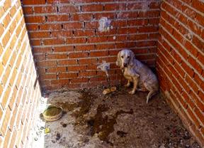 Rescatados 52 perros que sufrían maltrato y abandono en Villa del Prado