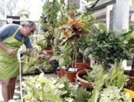 El resort de las plantas