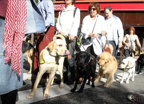 Perros guía reivindican en Madrid su derecho a acceder con normalidad a los lugares y servicios públicos