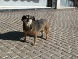 Multas de hasta 30.000 euros por maltratar a un animal