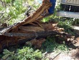 El papel que reciclan los madrileños evita talar 20 millones de árboles