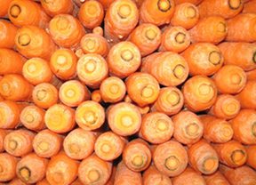 Las zanahorias desechadas sirven para producir bioetanol