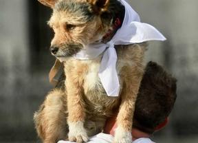 La campaña contra la rabia prevé vacunar a 70.000 mascotas