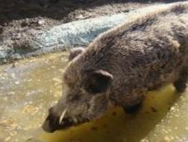 Los 770 cotos de Madrid enfrentan a ecologistas y cazadores