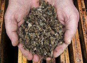 El 67% del polen de las abejas presenta tóxicos, según Greenpeace