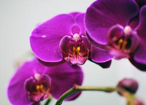 La Rosaleda del Parque del Oeste acoge una exposición de orquídeas