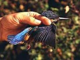 Madrid celebra este fin de semana el Día Mundial de las Aves