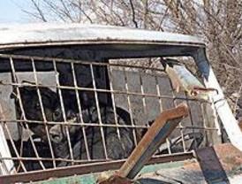 Rescatados 46 perros que se encontraban en