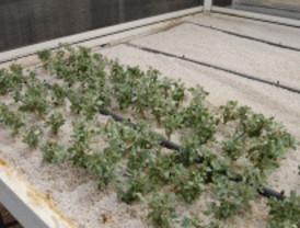El salado blanco, contra los suelos contaminados