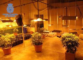 La Policía se incauta de 338 plantas de marihuana en una nave industrial