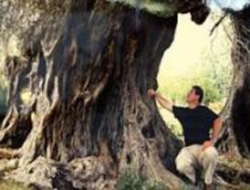 Los árboles, protagonistas de una exposición en el Paseo del Arte del Centro Puerta de Toledo