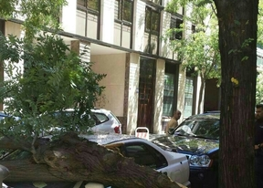 La rama de un árbol causa daños en un coche en Chamberí