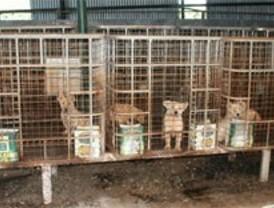 Rescatan a 129 perros que vivían enjaulados