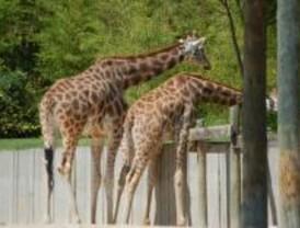 Los animales del Zoo combaten el calor con duchas y helados