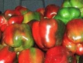 Los pimientos, tomates y las judías verdes están más baratos desde junio