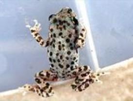 La Comunidad edita una guía para ayudar a la recuperación de anfibios en Peñalara