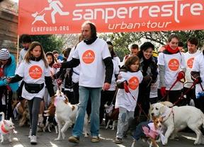 600 perros madrileños celebran la 'Sanperrestre'