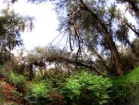 Alcalá rehabilita una parte del río Henares