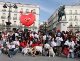 San Valentín canino en el corazón de Madrid
