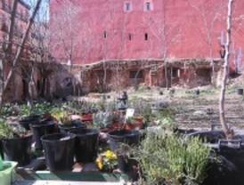 El ayuntamiento insta a los vecinos a desalojar un huerto urbano para construir un centro cultural