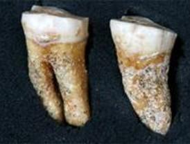 Hallados dos molares de Neandertal en Pinilla del Valle