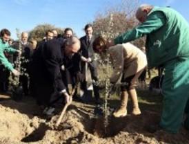 Las empresas plantarán 10.000 árboles en la Casa de Campo para compensar emisiones