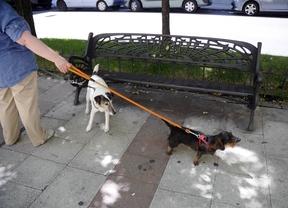 Getafe usará ADN de los perros para encontrar a los dueños que no recogen sus heces