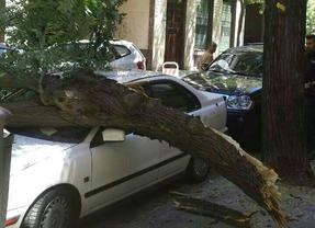 Cae una rama y destroza dos coches en la calle Ayala