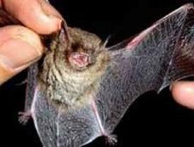 Ecologistas denuncian a la Comunidad por emprender una campaña contra los murciélagos