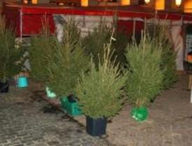 Los madrileños podrán entregar sus árboles de Navidad para 'reciclar' a partir del jueves