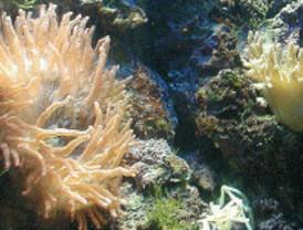 Minerales de hierro como señales de vida en condiciones inhóspitas