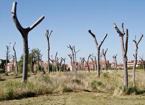Parque Fuente Carrantona