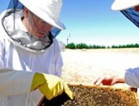 Con la primavera, vuelven los enjambres de abejas