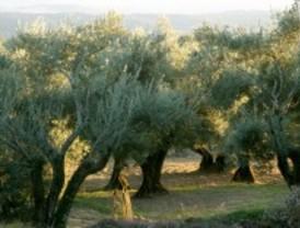 Nuevos marcadores de adulteraciones en aceites de oliva