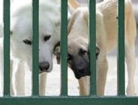 49 perros fueron rescatados de un piso de 40 metros en San Sebastián de los Reyes