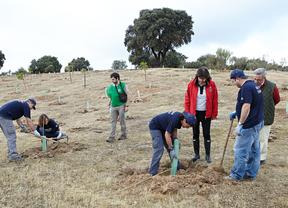 Más de 500 árboles repueblan una zona verde de Las Rozas