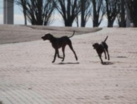 Desarticulada una trama de importación de perros de raza