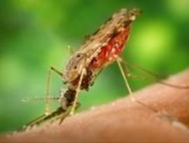 La Complutense descubre un nuevo principio activo contra la malaria
