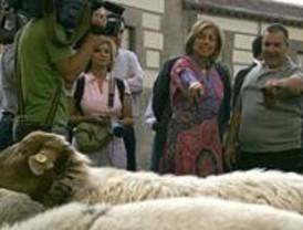 Ovejas, dromedarios y pastores de 36 países toman el centro de Madrid