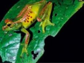 Madagascar es uno de los puntos de mayor biodiversidad del planeta