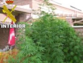 La Guardia Civil detiene por casualidad a una mujer por tráfico de marihuana